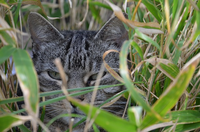 cat hiding in bamboo