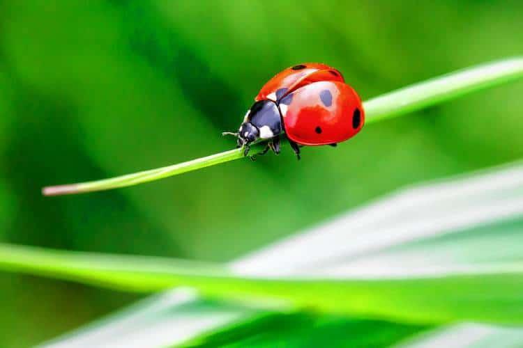 Ladybug and cats