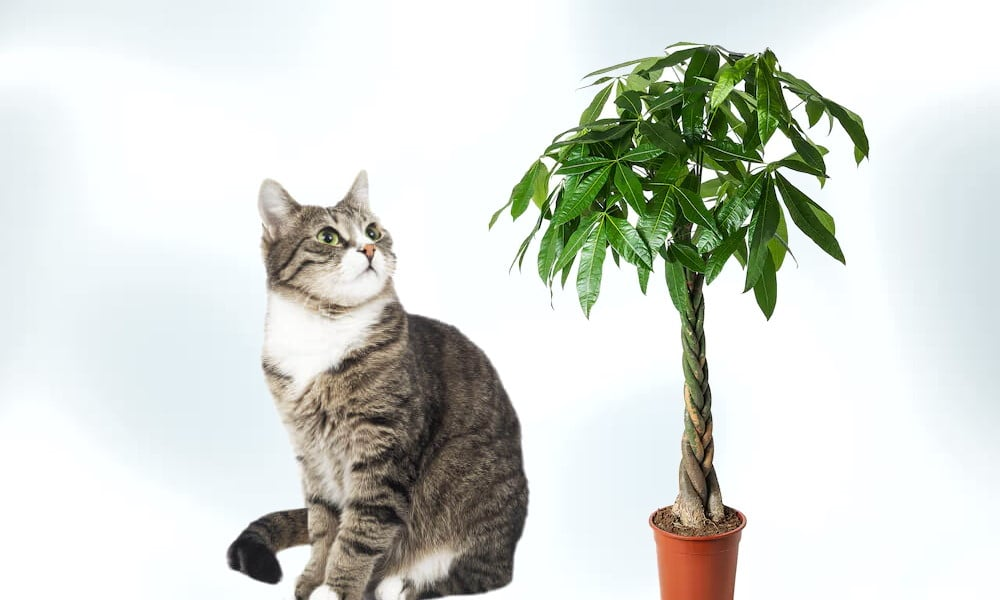 Cat and the Money Tree