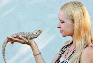 Popular pets - Bearded Agama