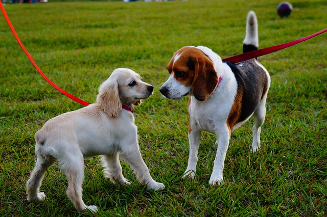 two dogs on a leash