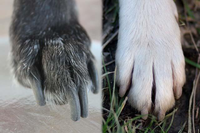 light and dark dog nails