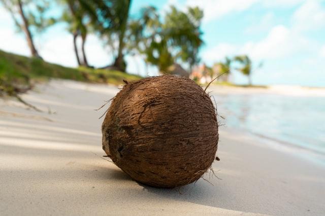 coconut in beach