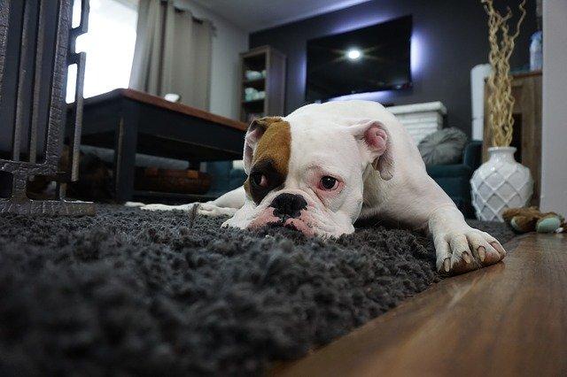dog lying on rug