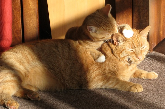 two ginger cats