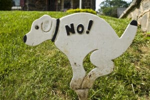 dog not pooping